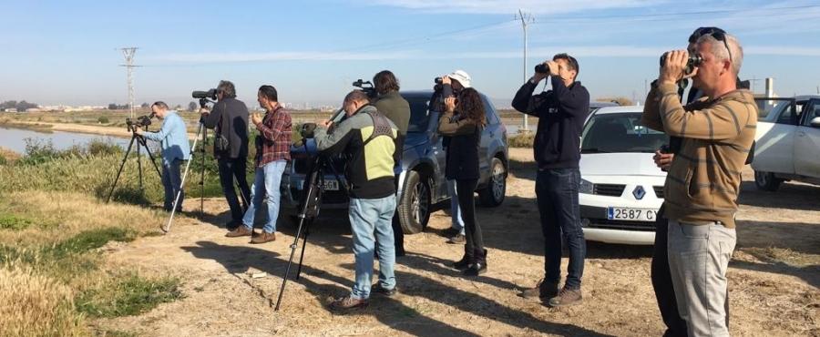 Birding Albufera en 'Samaruc Digital': aves, ciencia ciudadana y paisaje